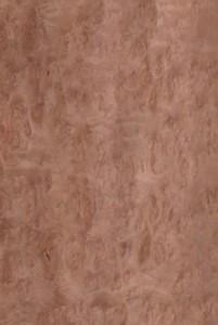eucalyptus pommelle