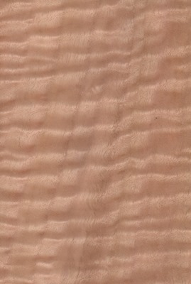 eucalyptusfigured