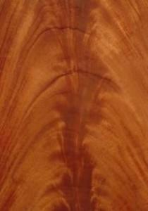 mahoganycurl