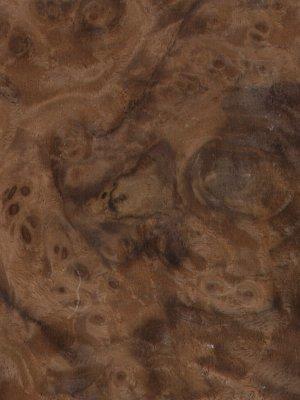 walnutamericancluster